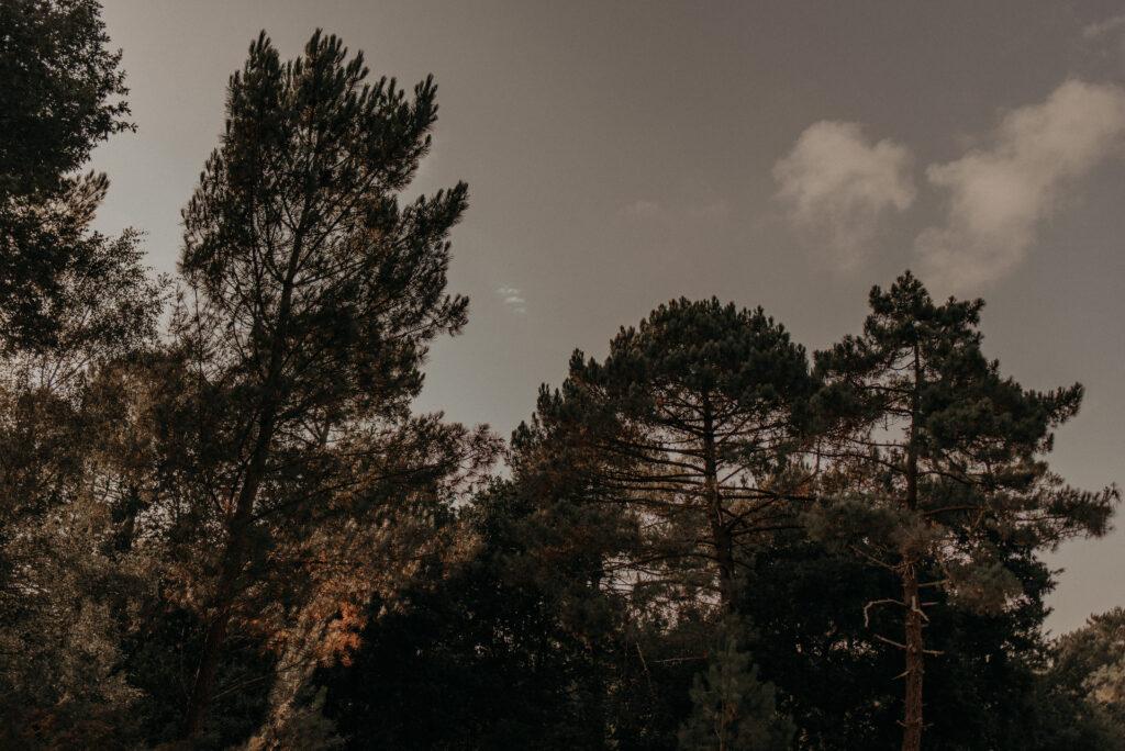 séance-engagement-dans-le-médoc-photographe-mariage-thuriane-photography-1